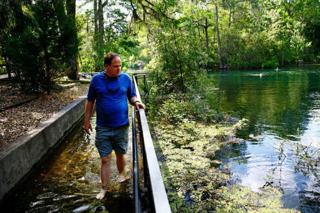Figure 2. A resident living near the Springs sees the algae blooming from nutrient overloads